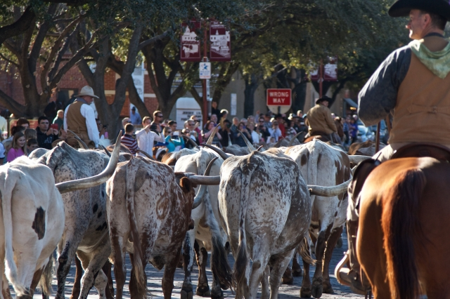 That's Longhorns in Fort Worth, Texas, y'all